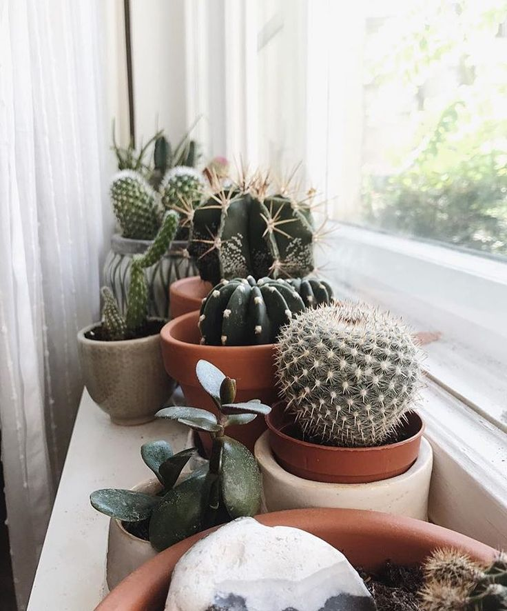 """2,471 gilla-markeringar, 18 kommentarer - The Potted Jungle (@thepottedjungle) på Instagram: """"Cacti on the window : @gretasschwester"""""""