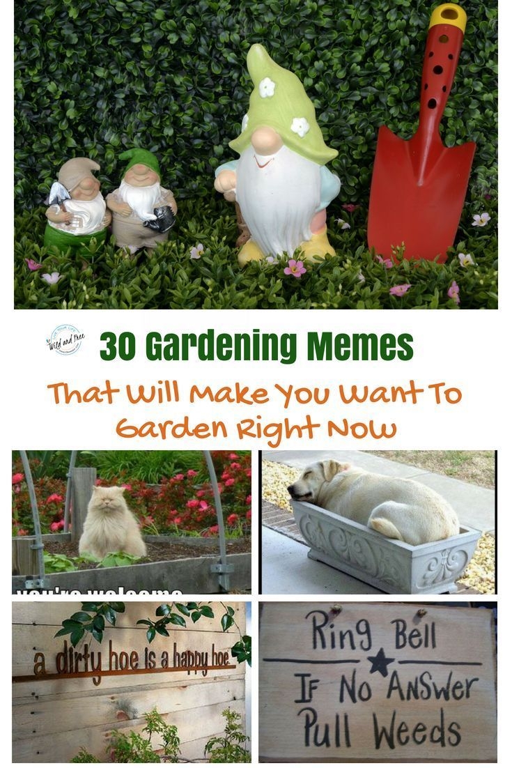 Pin By Cow Clementine On Gardening Gardening Memes Organic Gardening Tips Gardening Jokes