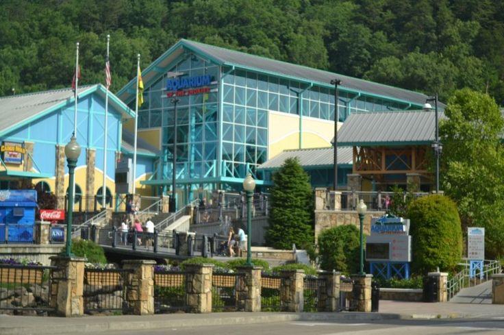Ripley's Aquarium - Gatlinburg   SouthernKissed.com
