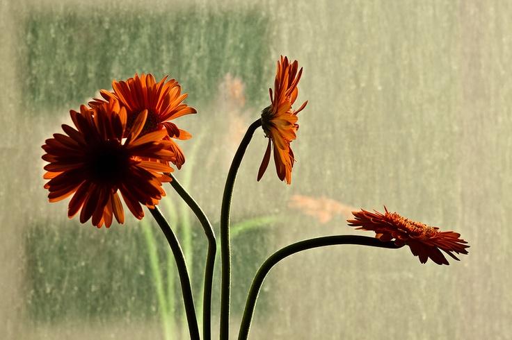 Orange FlowersOrange Flower
