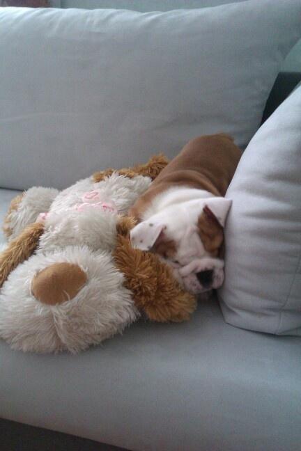Bulldog Filippo