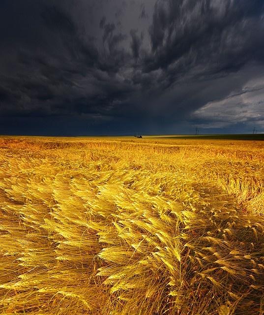 thunderstorm over a wheat field  @ https://www.pinterest.com/pin/200339883393853414/