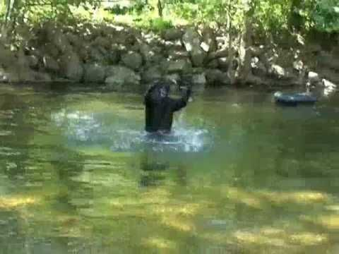 Fishermen's frightening Bigfoot footage .