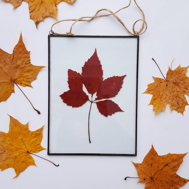 pressed leaves frame, Pressed plants suspended between glass, Double Sided Glass Frame, Gift for nature lovers by Julivani on Etsy https://www.etsy.com/listing/562152160/pressed-leaves-frame-pressed-plants