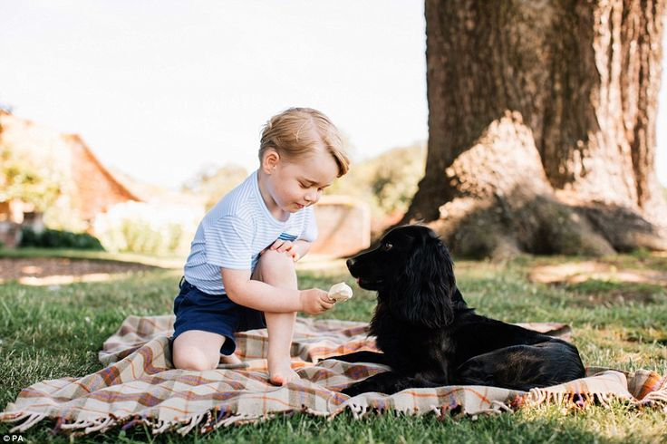 Prince George feeds his dog, Lupo, an ice cream in the family's garden in a new image rele...