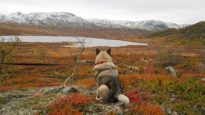 Hardangervidda. Norway. www.inatur.no/hytte/52f37d1be4b0ee6bd45a5234/urdevatn-pa-hardangervidda-ekte-hytteliv-pa-telemarks-tak    Inatur.no