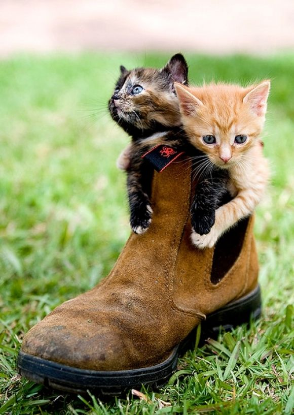 Cats In Shoes | Cutest Paw