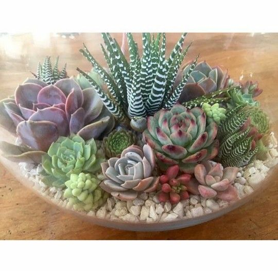 Succulent Dish Garden Ideas use unique upcycled containers to create your own succulent dish garden these tin Succulent More
