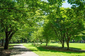 Summer Kinuta Park