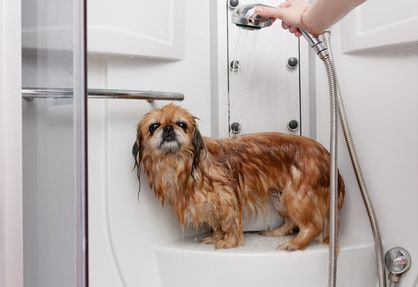 22 best self service dog wash images on pinterest dog wash happybays dog wash is the most popular dog wash in calgary we provide a responsible dog wash daycare service that leaves your dog feeling clean solutioingenieria Gallery