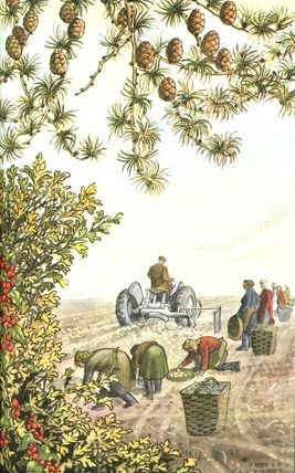 "Harvesting potatoes in England. (from vintage English ""Ladybird"" storybooks)"
