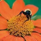 Attract Beneficial Insects with Flower Borders: Organic Gardening
