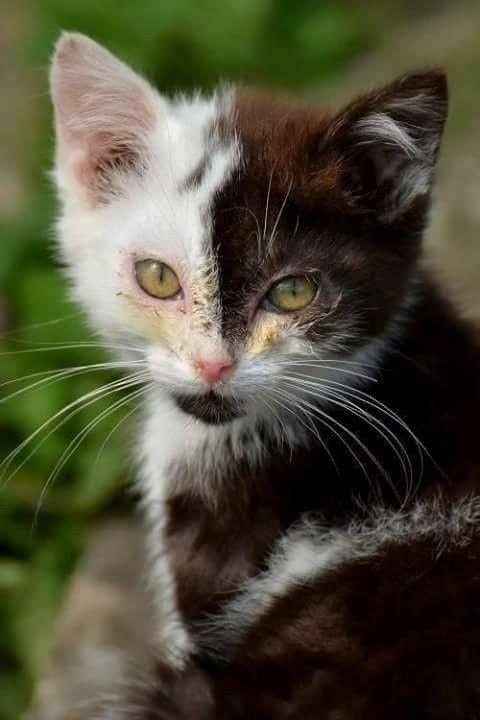 Yin Yang Cutie