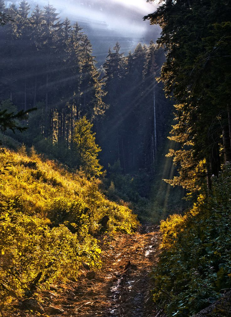 morning rays in the forest in #Liptov region