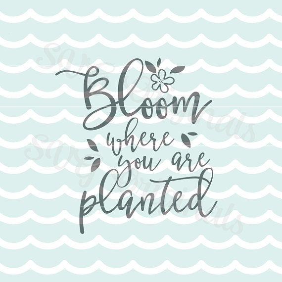 Bloom where you are planted SVG Vector file. Easter Cricut Explore and more. Hello Spring Flowers Bloom SVG