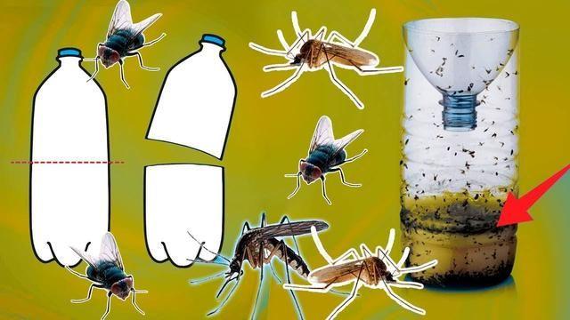 7 Formas Caseras De Eliminar Los Mosquitos Zancudos Y Moscas Zancudos Como Eliminar Moscas Mosquitos