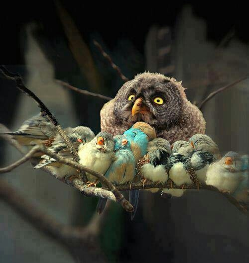 Misfits @Gina Harwell-Mcpeak !!Talk Head, Pixar Shorts, Owls Baby, Beautiful Birds, Families, Angry Birds, Crui Line, Feathers Friends, Animal