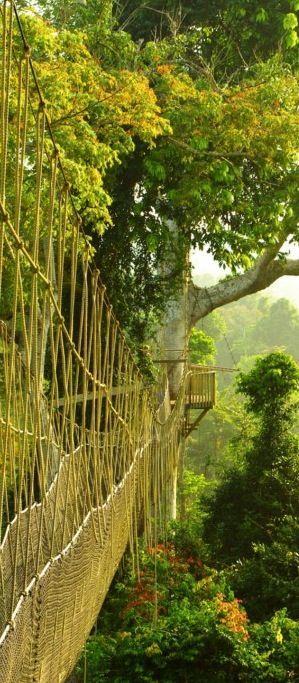 Ghana national park.  Den passenden Koffer für eure Reise findet ihr bei uns: https://www.profibag.de/reisegepaeck/