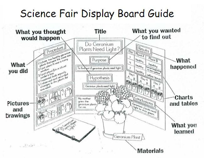 example of a display board for 1st grade science | Science Fair Information