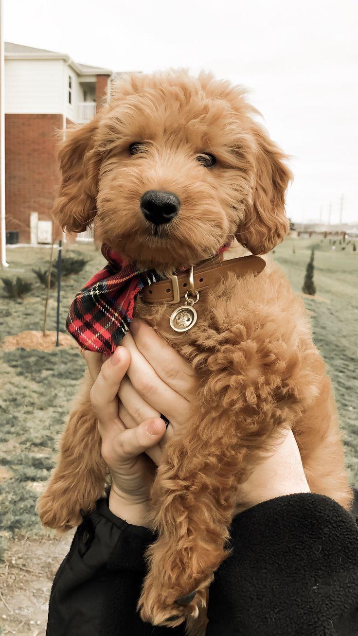 Por qué es muy importante preparar a tu perro   – dogs