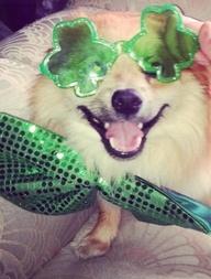 this cute puppy says happy st patrics day ruff ruff