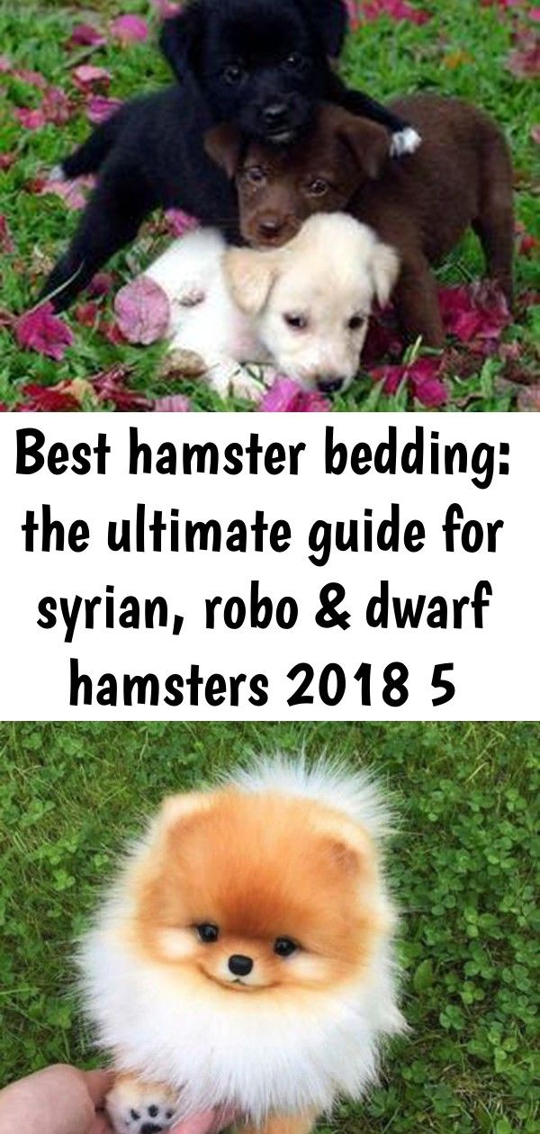 Best hamster bedding the ultimate guide for syrian, robo