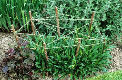 Staking perennial plants with cat's cradle of string and sticks - ©Jonathan Buckley/GAP Photos, Design: Helen Yemm