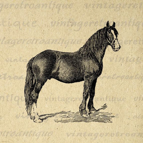 Printable Digital Shire Colt Horse Graphic Animal Image Download Antique Clip Art. High resolution printable graphic for iron on transfers, printing, t-shirts, and more great uses. Real vintage artwork. Antique artwork. This digital graphic is large and high quality, size 8½ x 11 inches. A Transparent background png version is included.