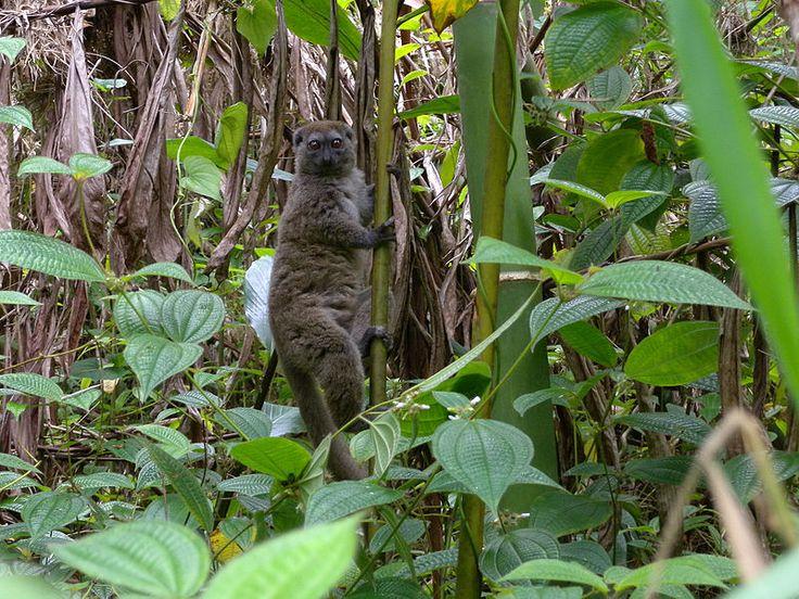 #Madagascar, Parcul Lemurienilor, #vacantapersonalizata, #vacanta, #rotravel, #destinatiasaptamanii