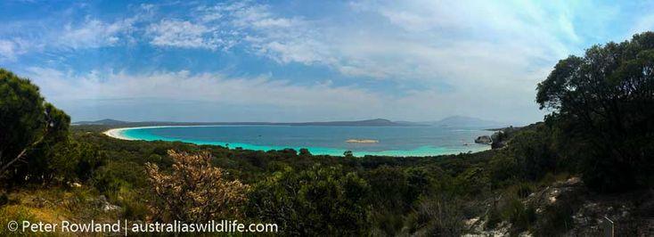 Two People's #Bay in South-West #Western #Australia #aus_wildlife