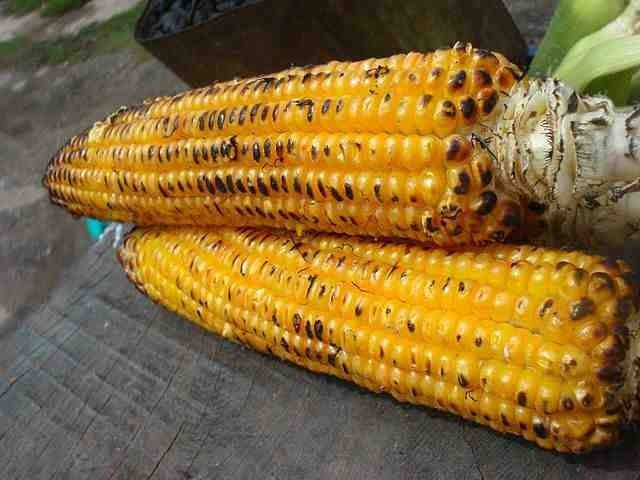Corn Oil Nutrition Data: What Makes Corn Oil Beneficial