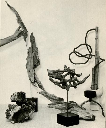 Driftwood sculptures by Mary C. Knight.    c. 1960