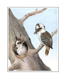 Neville HP Cayley-Laughing Kookaburra-Dacelo novaeguineae