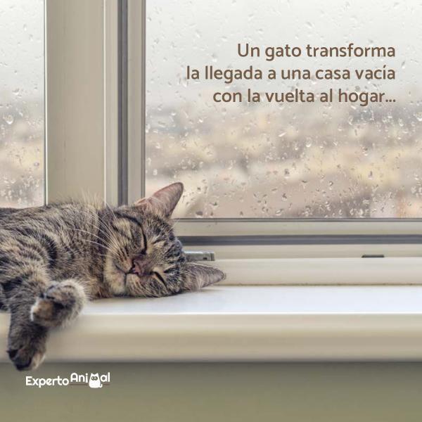 Frases De Gatos Gatos Mascotas Frases Y Gato Durmiendo