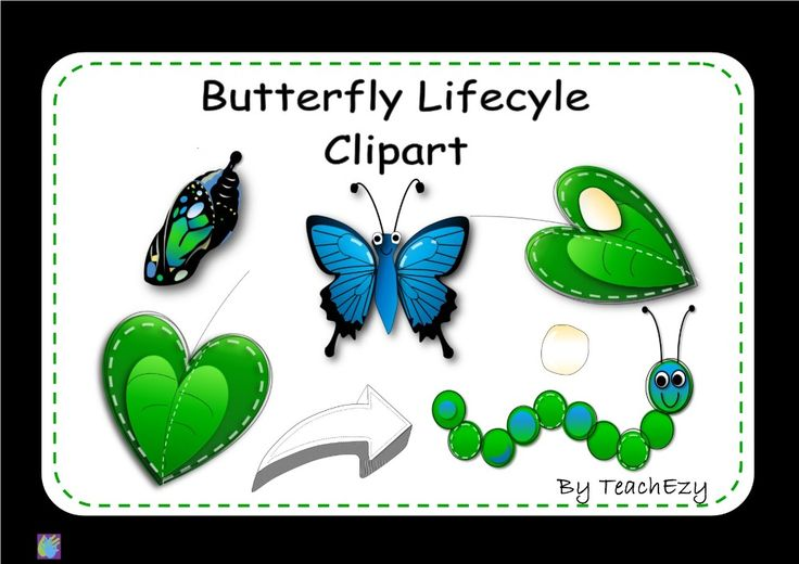 Butterfly Lifecycle ClipArt for A$2.50 #onselz
