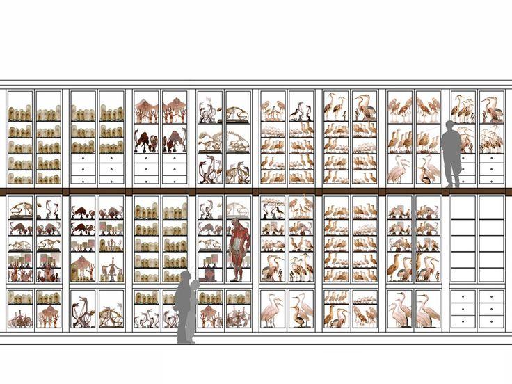 Progetto, Raccogliere per stupire, raccogliere per studiare, corridoio ottocentesco , Museo Storia Naturale, Venezia