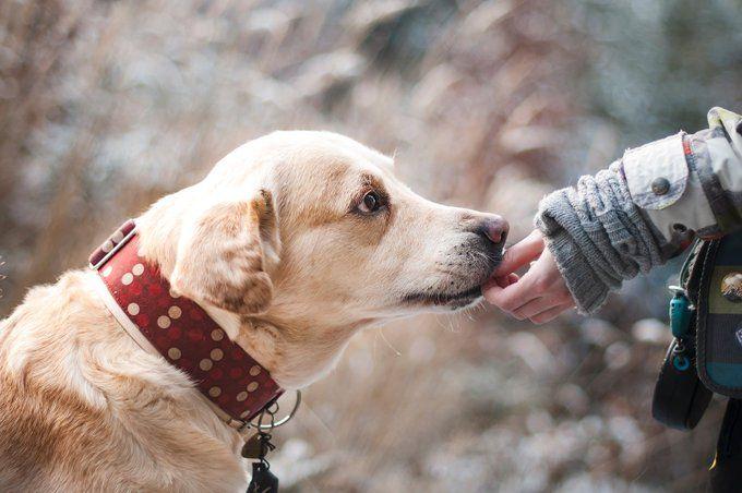 22 ペットくすりwebさん Petkusuriweb Twitter 犬の品種 ラブラドール レトリーバー 犬の行動