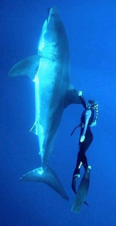 Foto de un tiburon con una persona •-•