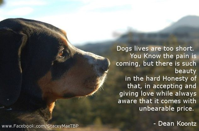 Quotes About Love Dogs : quote from Dean Koontz about dogs..... Dogs Pinterest The o ...