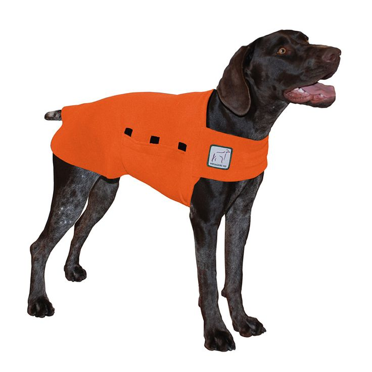 Orange German Shorthaired Pointer GSP Dog Tummy Warmer, great for warmth, anxiety and laying with our dog rain coat. High performance material. Made in the USA.