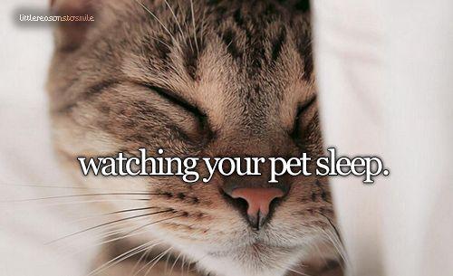 """""""Watching your pet sleep."""" #Pet #Cat #Adorable"""