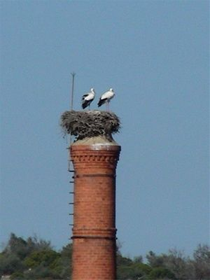 bird's nest in a tall chimney in Portugal