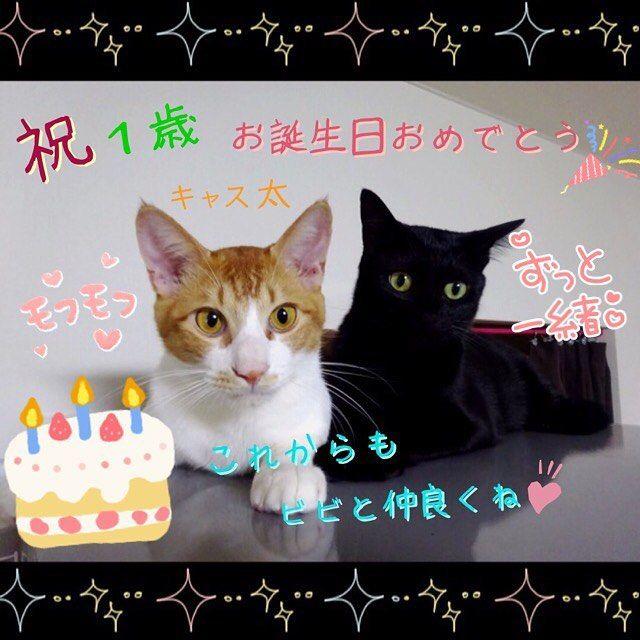 #キャス太 #誕生日おめでとう #3月21日生まれ #3月21日 1日間違って夜勤希望書いてしまって#夜勤中 😩 ごめんよ~(´A`。)グスン これからもビビと仲良くね♪ #愛猫 #猫 #茶白猫 #愛猫誕生日  #誕生日