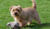 Hypoallergenic Dog Breeds, Best Hypoallergenic Dog List