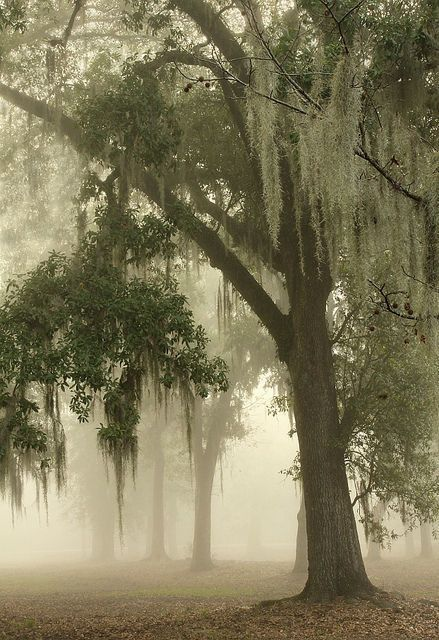 This Ivy House  - bonitavista:   New Orleans, Louisiana photo via...