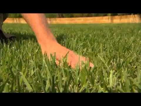 Zoysia grass rust color dress