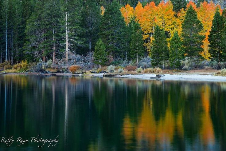 Aspens and pines reflected in Rock Creek Lake, Eastern Sierras  My happy place!  #ig_bliss #ig_shotz_trees #ourdailyplanet #nikon #rei #naturephotography #naturelover #wildernessculture #mountains #gramoftheday #picoftheday #sierranevada #hiking #bestoftheday #landscapephotomag #explore #instagood #jawdroppingshots #travel #trees #nature #getoutside #bestnatureshot http://tipsrazzi.com/ipost/1505973833403625020/?code=BTmSzj1Dm48