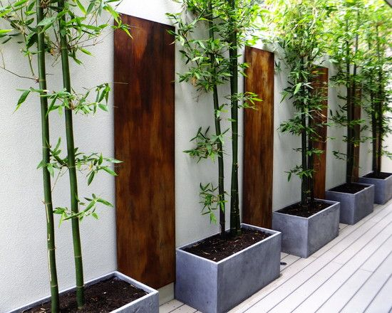 Decorating, Appealing Contemporary Landscape With Modern Bamboo Planters Ideas Also White Floorboards Also White Wall Color With Charming Wo...