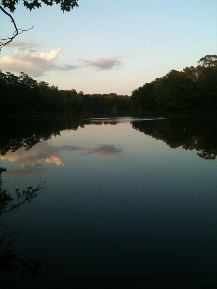 Va beach state park. Mirror image