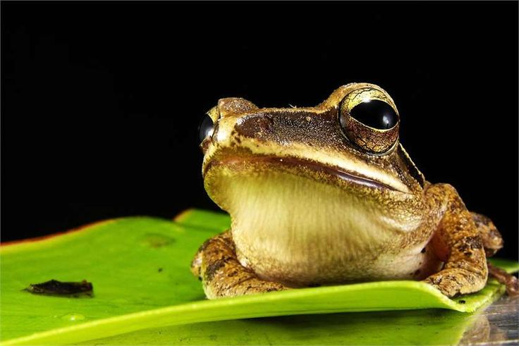 Do you #pet a #frog? Do you know what it should eat? Here's a guide to the essential nutrients that it requires for a healthy growth!